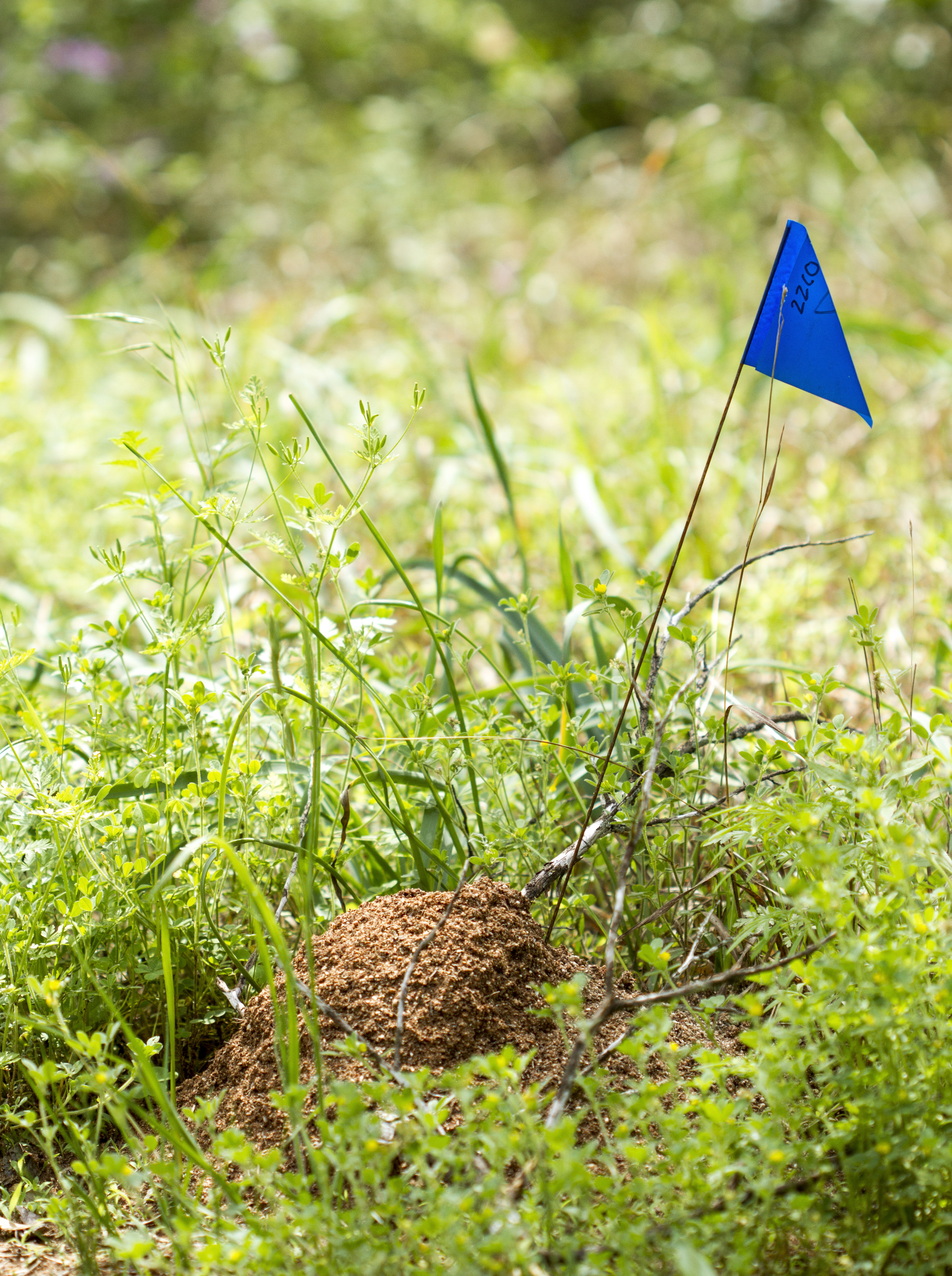 Biosecurity Queensland's bungled fire ant program is alienating the public rather than engaging it in the fight against fire ants.