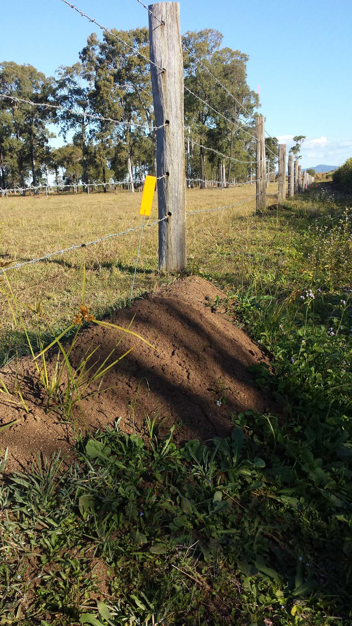 Biosecurity Queensland removing ID tags from untreated fire ant nests. Covering-up evidence of failure?