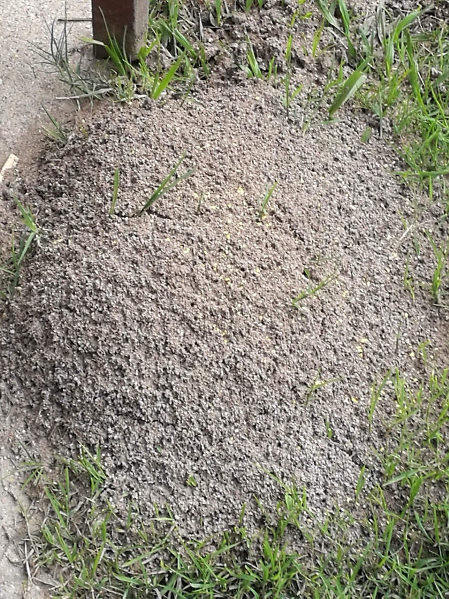 With a backlog of thousands of untreated fire ant nests Biosecurity Queensland is throwing an expensive cocktail of chemicals at them: to improve the statistics rather than kill ants. Time for a Royal Commission.