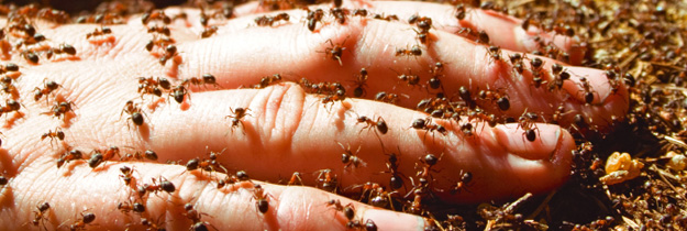Thousands of fire ant nests in an estate in Archerfield, 15km south Brisbane CBD. Infested since 2001. Fire ants entrenched and out of control in SEQ. The result of a 20 year, $600+m Fire Ant Fiasco. Time for a Royal Commission.