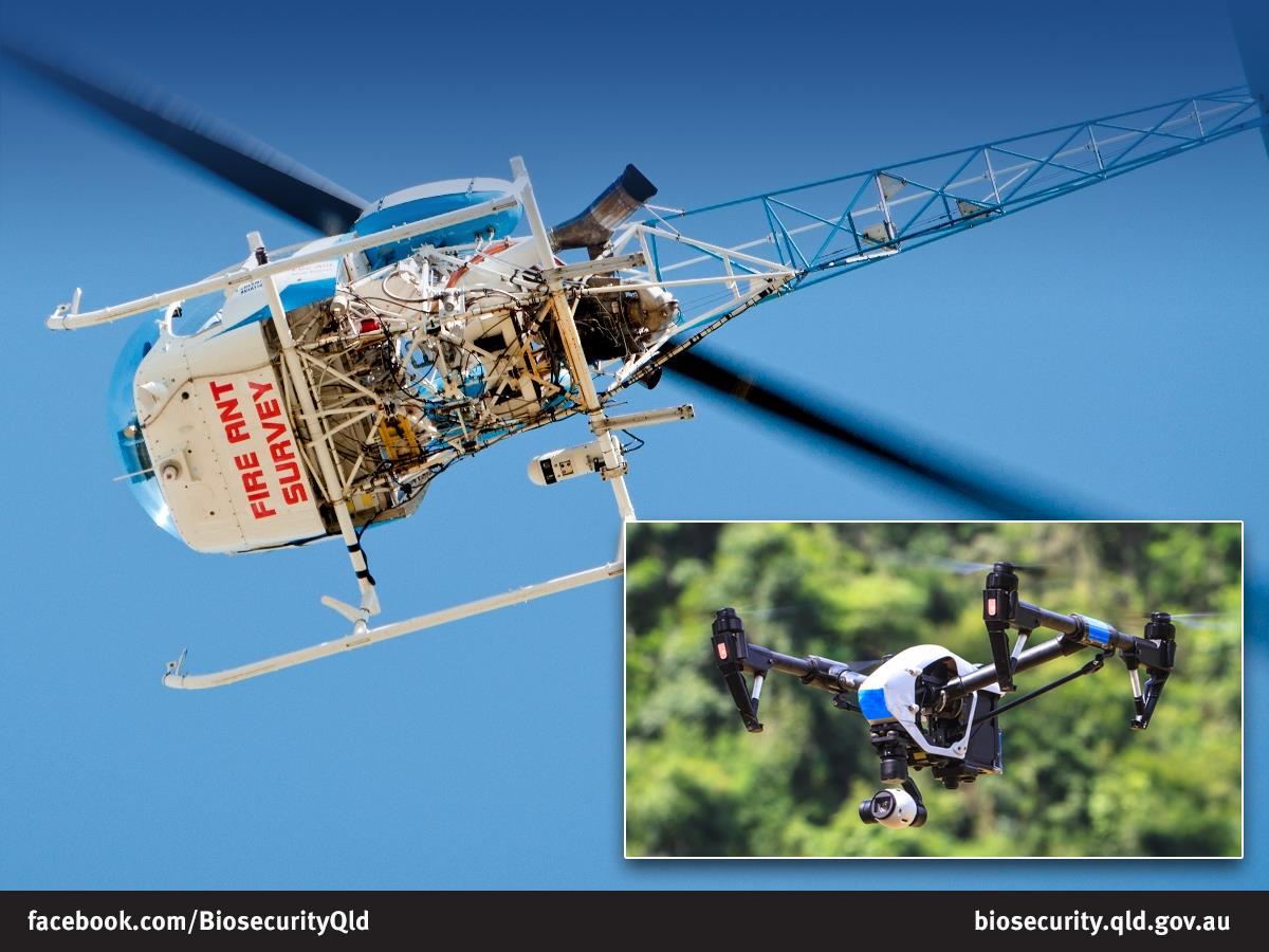 Biosecurity Qld's 'game-changer' - to detect fire ant nests with high-res cameras mounted on a helicopter - is a loser. Program Steering Committee can't prove fire ants eradicated. Time for a Royal Commission.